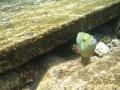304-Guard_Fish_