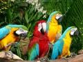 137-jurong-bird-park-singapore2