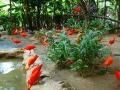 138-Jurong-Bird-Park-Singapore