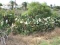6-tunisia flora