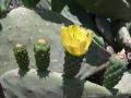 8-tunisia flora3
