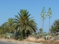 9-tunisia flora2