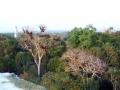 102-Tikal observatorio