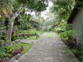 115-guatemala vegetation